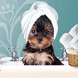perro_baño.jpg