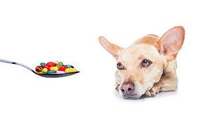 perro farmaci.jpg