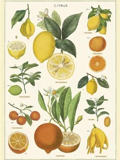 פוסטר : Citrus