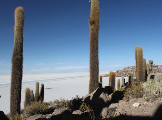 Isla Incahuasi, salar, Bolivie