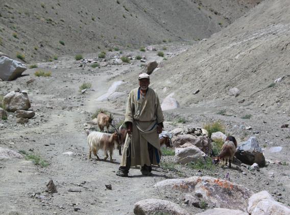 Berger sur le sentier de Temisgang, Ladakh