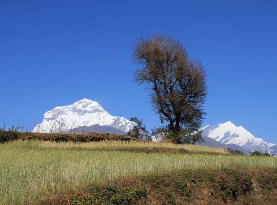 Tukche Peak et Daulaghiri