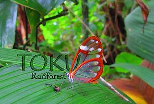 toku guanacaste rainforest.jpg