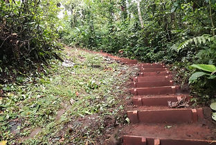 Costa Rica Rainforest Tours