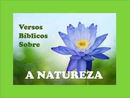 Memorizando Versos Bíblicos Sobre a Natureza (download)