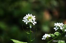 Modéstia: Através dos Olhos de uma Flor