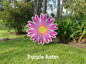 Purple Aster.png