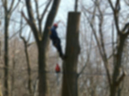 Men in Trees (resting).JPG