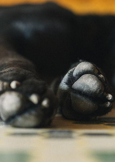dog-paws_4460x4460.jpg