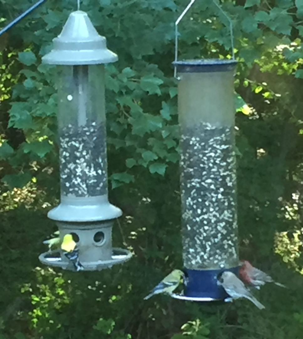 bird feeders_edited.jpg