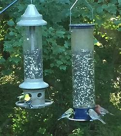 bird feeders_edited.jpg