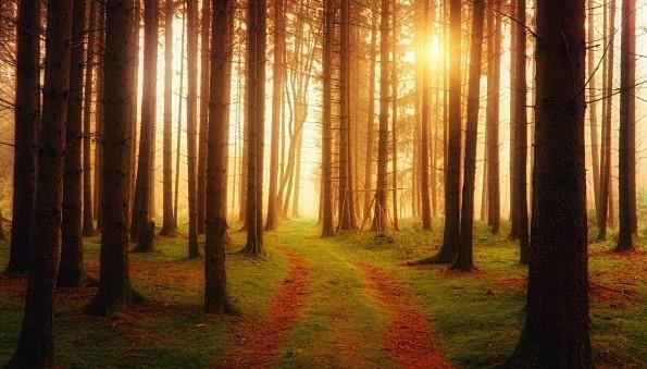 Goud zonlicht schijnt fel door de bomen
