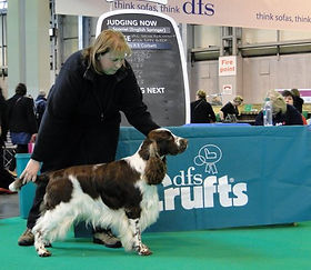 Crufts_11_Arther.jpg