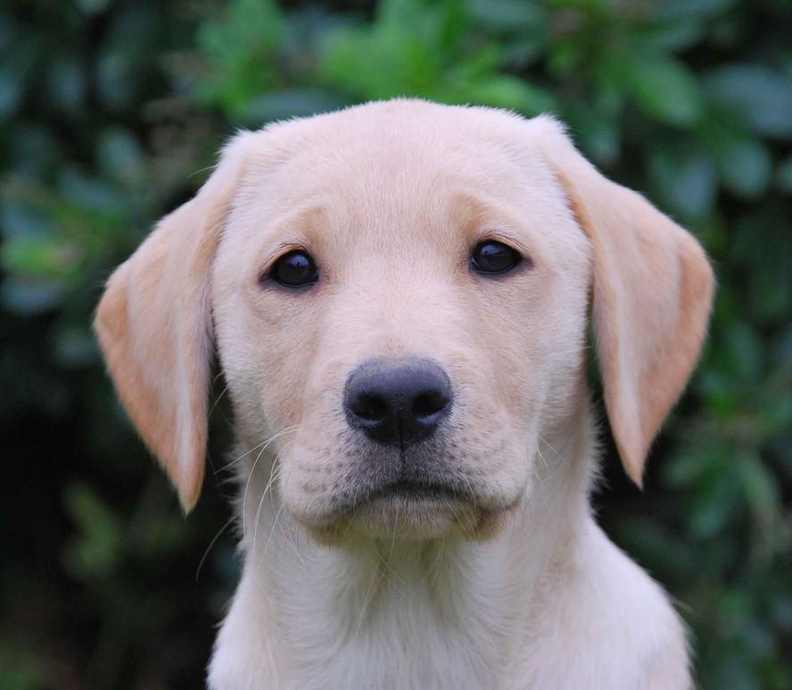 lizzie as pup.jpg