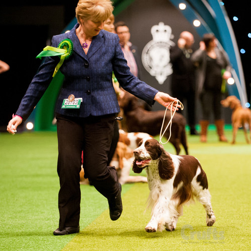Crufts original 3.jpg