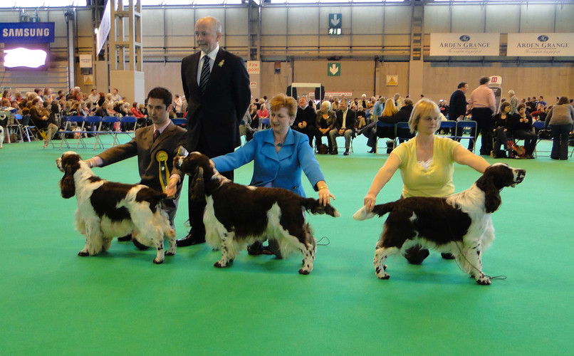 dog_line_up_crufts_10_1.jpg