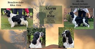 Rita & Storm puppies.png