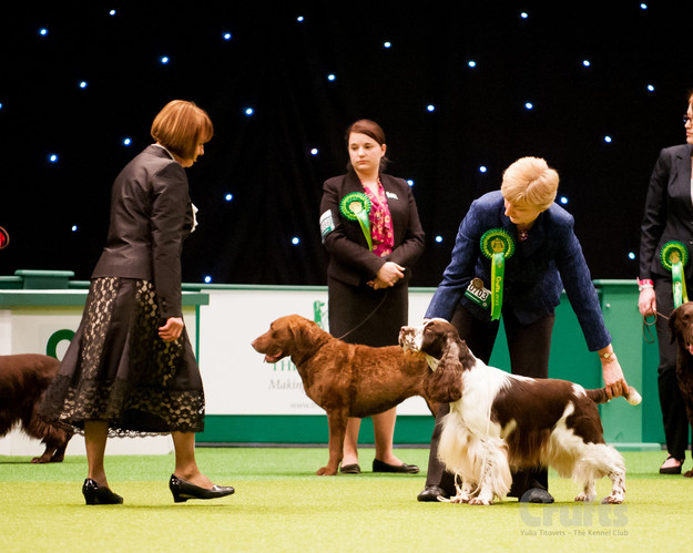 crufts original.jpg