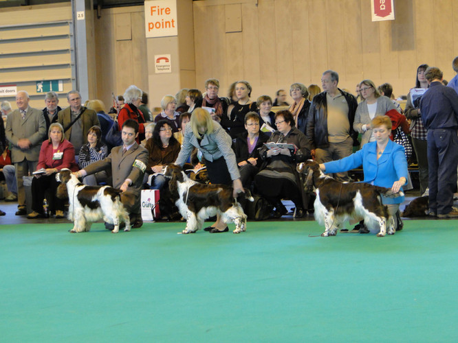 harvey_crufts_10_2.jpg