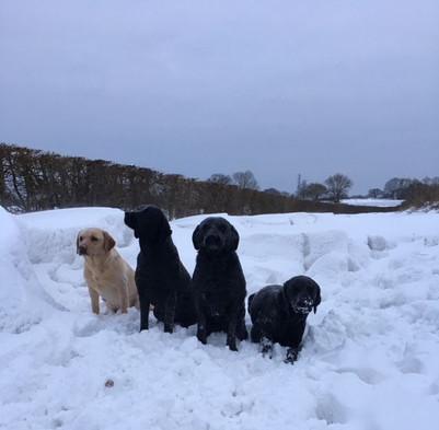 Lbs in snow.jpg