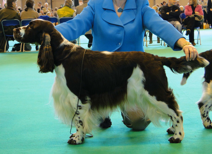 harvey_crufts_10_3.jpg