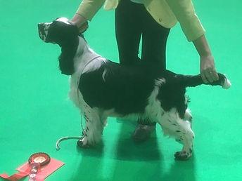 Bolt winning Best Puppy at Crufts 2020