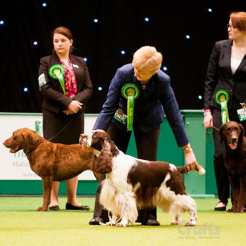 Crufts original 2.jpg