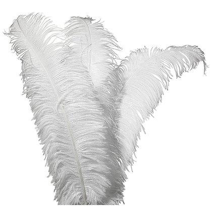 Grote witte struisvogelveren van 50cm