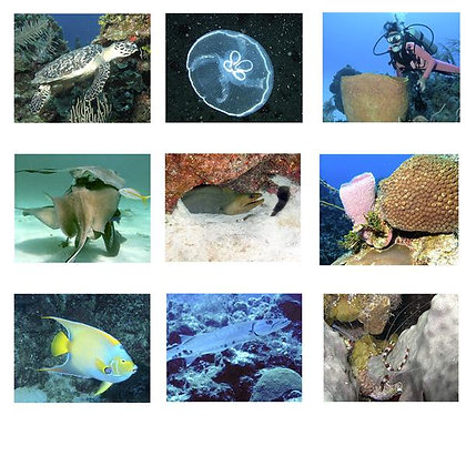 Tropical Fish Photo Quilt Squares