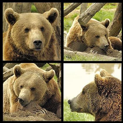 Bear Rubber Coaster Set of 4