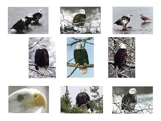 Bald Eagle Photo Quilt Squares