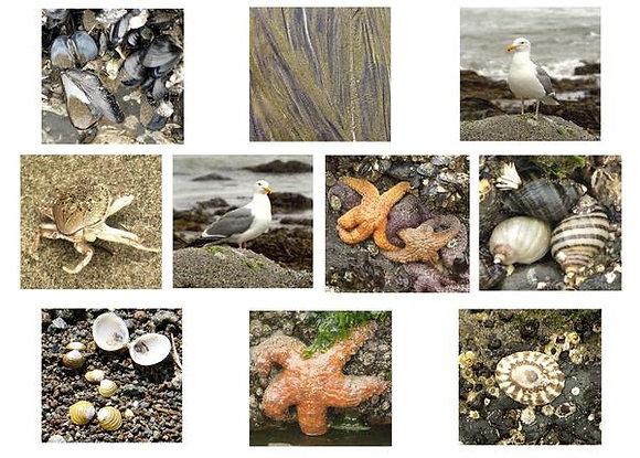 Small Sea Creatures Photo Quilt Squares