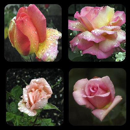 Roses Rubber Coaster Set of 4