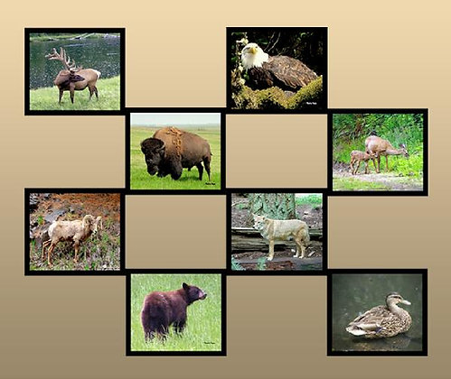 Animals in the Wild Photo Quilt Squares
