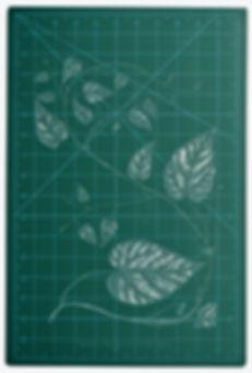 Tragia leucandra (1) copia.jpg