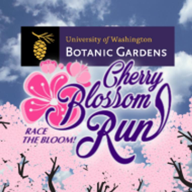 Cherry Blossom 5K Run - University of Washington, Seattle