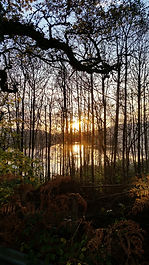 Sunset through trees looking at Tighnabruaich from the Colintraive Coastal road