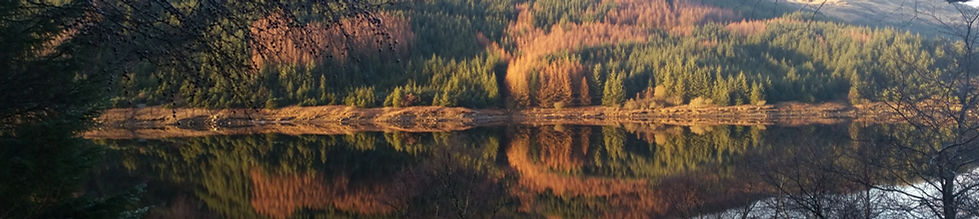 Beautiful reflection of trees at the Tarzan dam near colintraive
