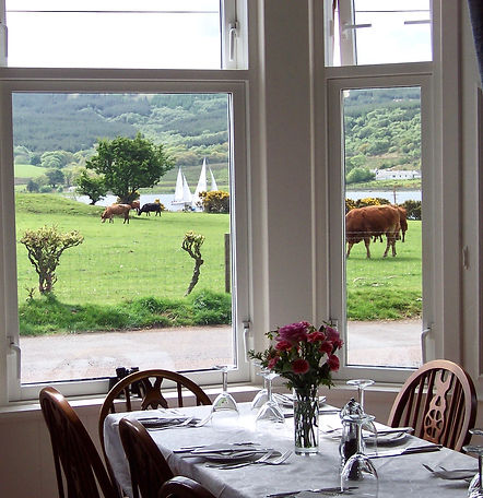 View of yachts sailing and cows from the Dining room at the Colintraive Hotel