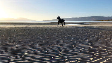 Dog on KILBRIDE BAY
