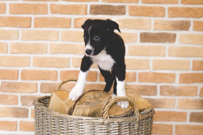 puppy_ostap_20161030 (56 of 84)