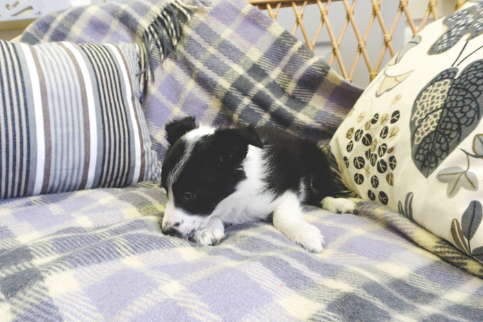 puppy_ostap_20161030 (78 of 84)