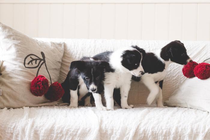 puppy_ostap_20161030 (40 of 84)