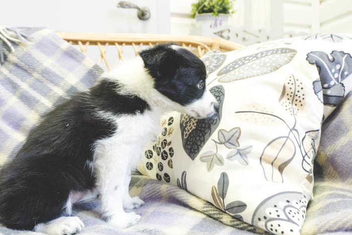 puppy_ostap_20161030 (81 of 84)