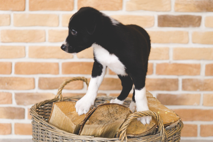 puppy_ostap_20161030 (55 of 84)