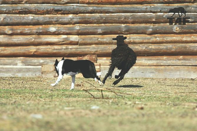 Littel bit photos from herding