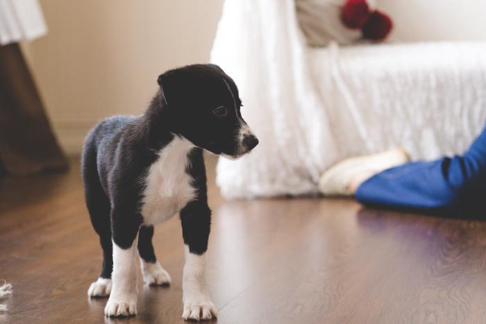 puppy_ostap_20161030 (52 of 84)