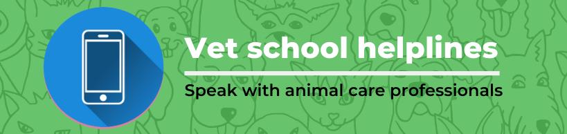 Vet School Helplines