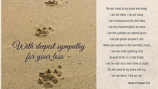 I'm Not There poem e-card