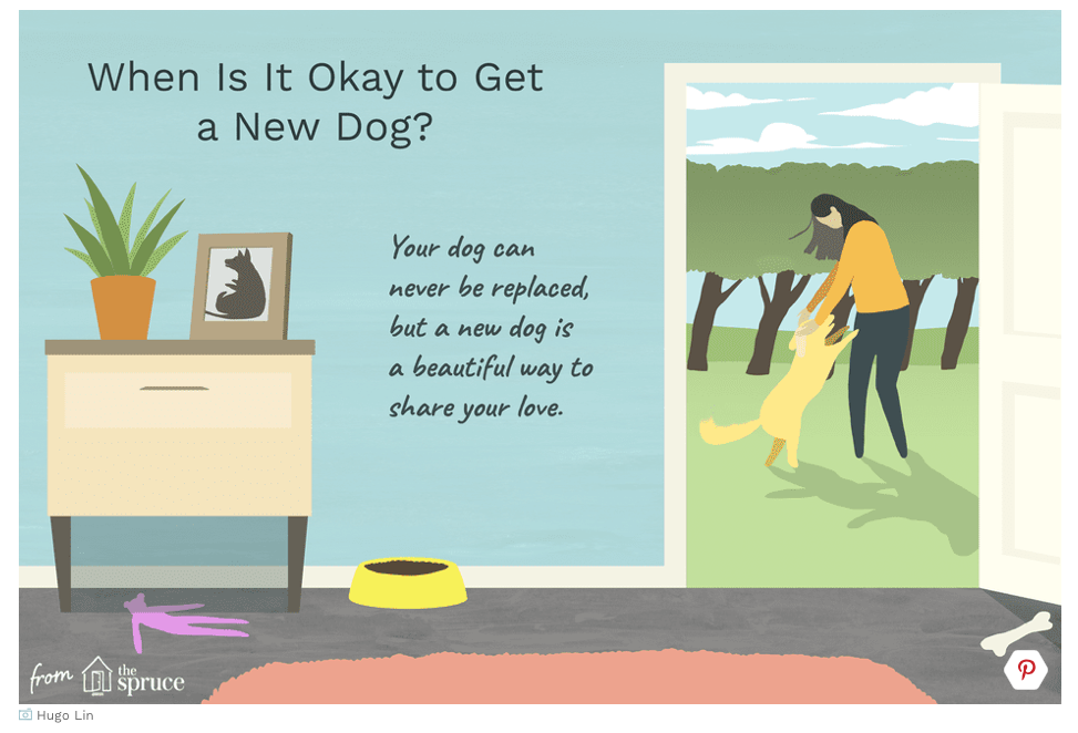 When is it okay to get a new dog?